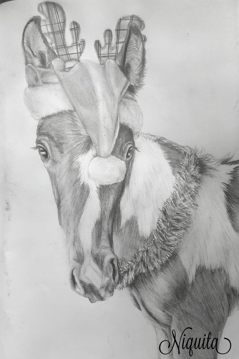 Niquita On Twitter My Friend S Fur Baby Was All Dressed Up For Xmas Pencil Sketch Drawing Graphitepencil Art Artwork Realistic Horse Horses Horsie Foal Babyhorse Cutie Animal Animals Dressedupforchristmas Decorated Https T Co