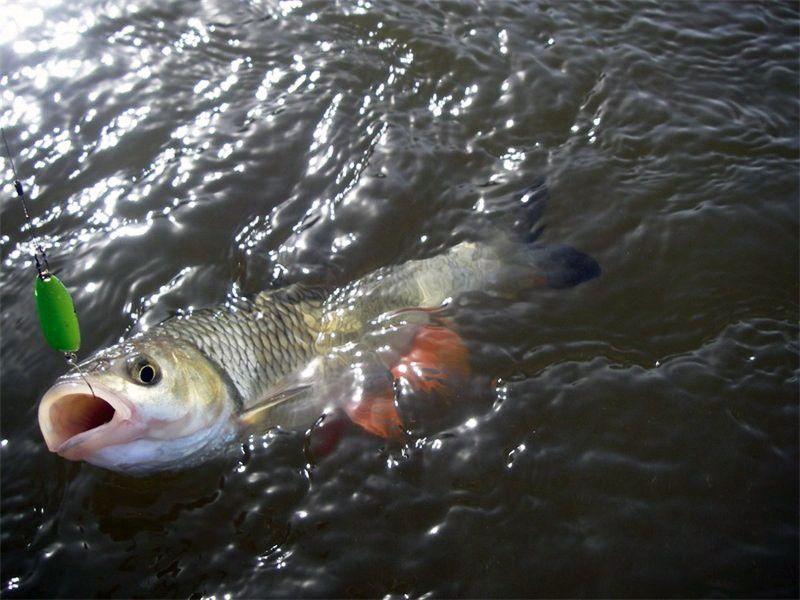 Рыбалка на банном башкирия запрет