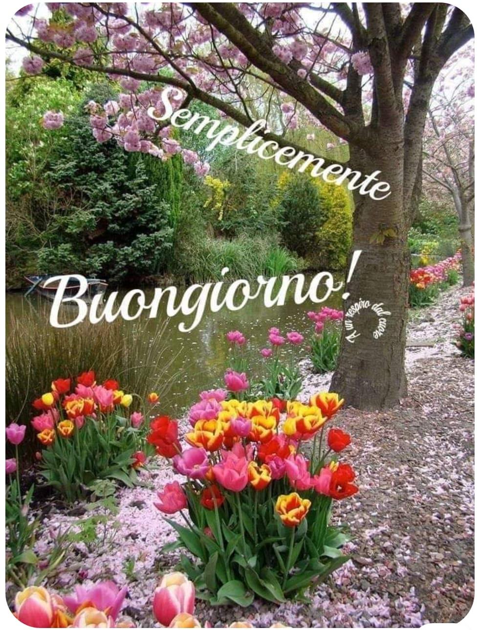 """Elvira Di Cori on Twitter: """"@Anitamia48 buongiorno e buon sabato fiorito e  dai mille colori! ????… """""""