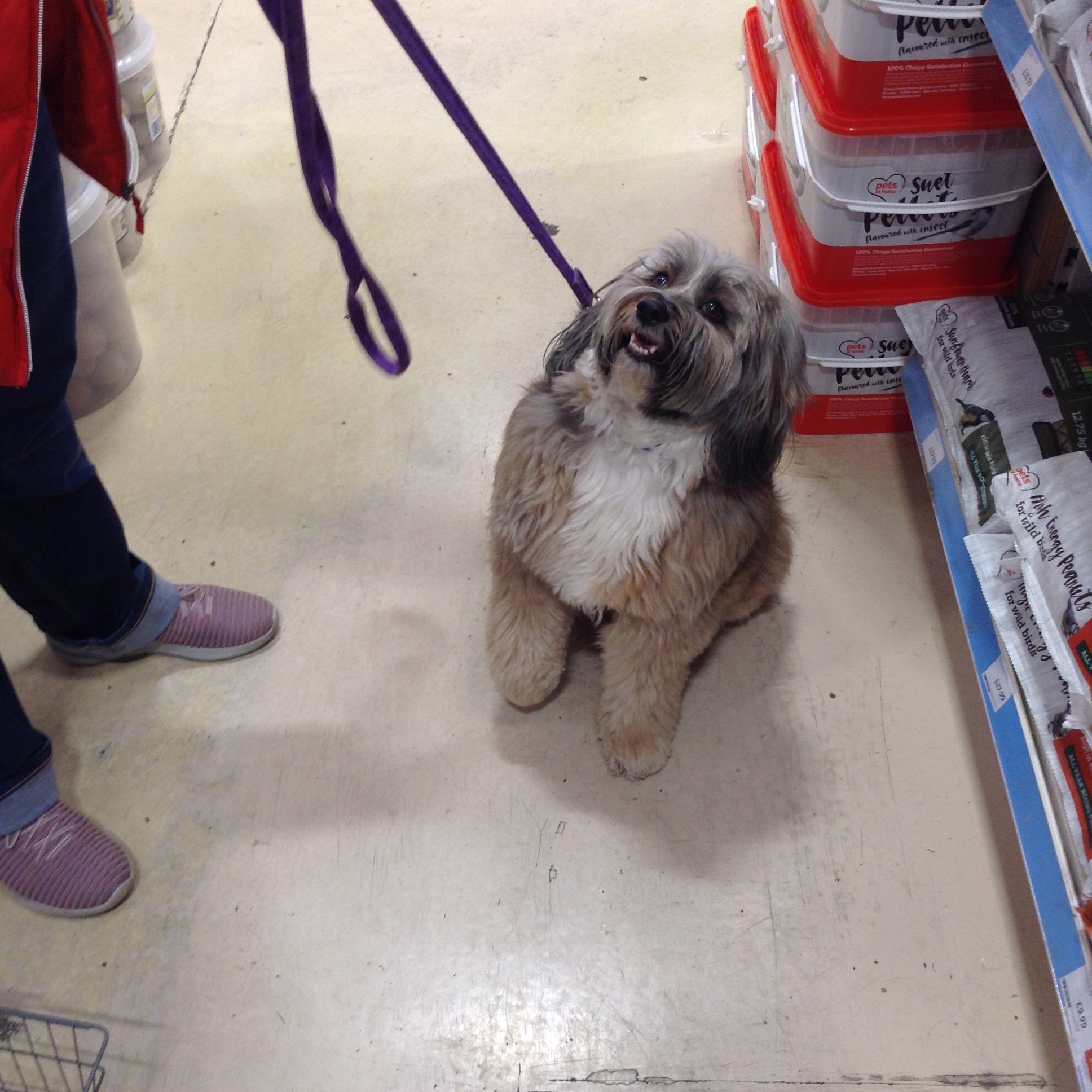 Tamworth Pets At Home And Groom Room On Twitter A Few Of Our Visitors Today Tamworth Staffordshire Petsathome Petsathometamworth Tamworthgroomroom Dog Pets Puppy Kitten Fish Birds Cats Smallanimal Wildbirds Reptile Puppylove