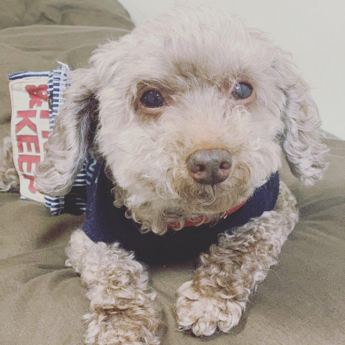 仙台から車で大阪に向かっている広田さんがまだ着かない。 大丈夫かしら?  眠いの。 浜ちゃん。  明日は2試合。 はよ寝ないと。  #wavepro  #OZアカデミー #プロレス  #プロレスラー  #犬なしでは生きていけない  #愛犬との暮らし  #犬のいる暮らし  #犬のいる生活  #犬とお出かけ  #犬がいる生活pic.twitter.com/znmq3Aee9c