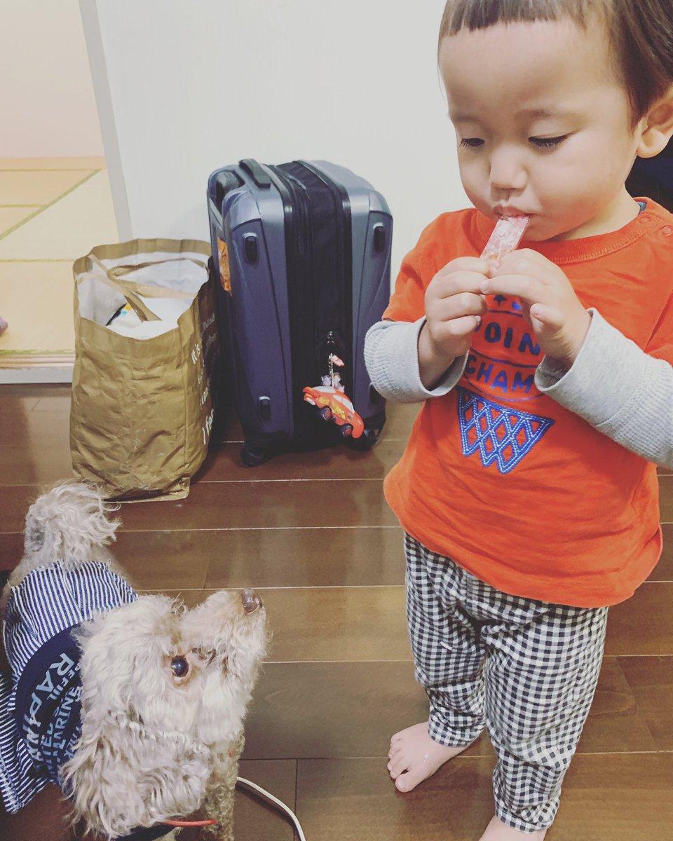 広田さん無事到着! きのっぴのカニカマを狙う浜子。  無事に着いたので、ホッと一安心。  さて寝よ。  #wavepro  #OZアカデミー #女子プロレス #犬なしでは生きていけない  #犬のいる暮らし  #犬のいる生活  #犬とお出かけ  #犬がいる生活  #トイプードル #大阪  #大阪旅行 #獲物を狙うpic.twitter.com/ZKs8sZYml1