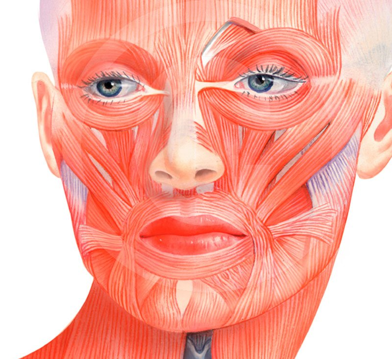 facial-muscles-diagram-indian-naked-women-pics