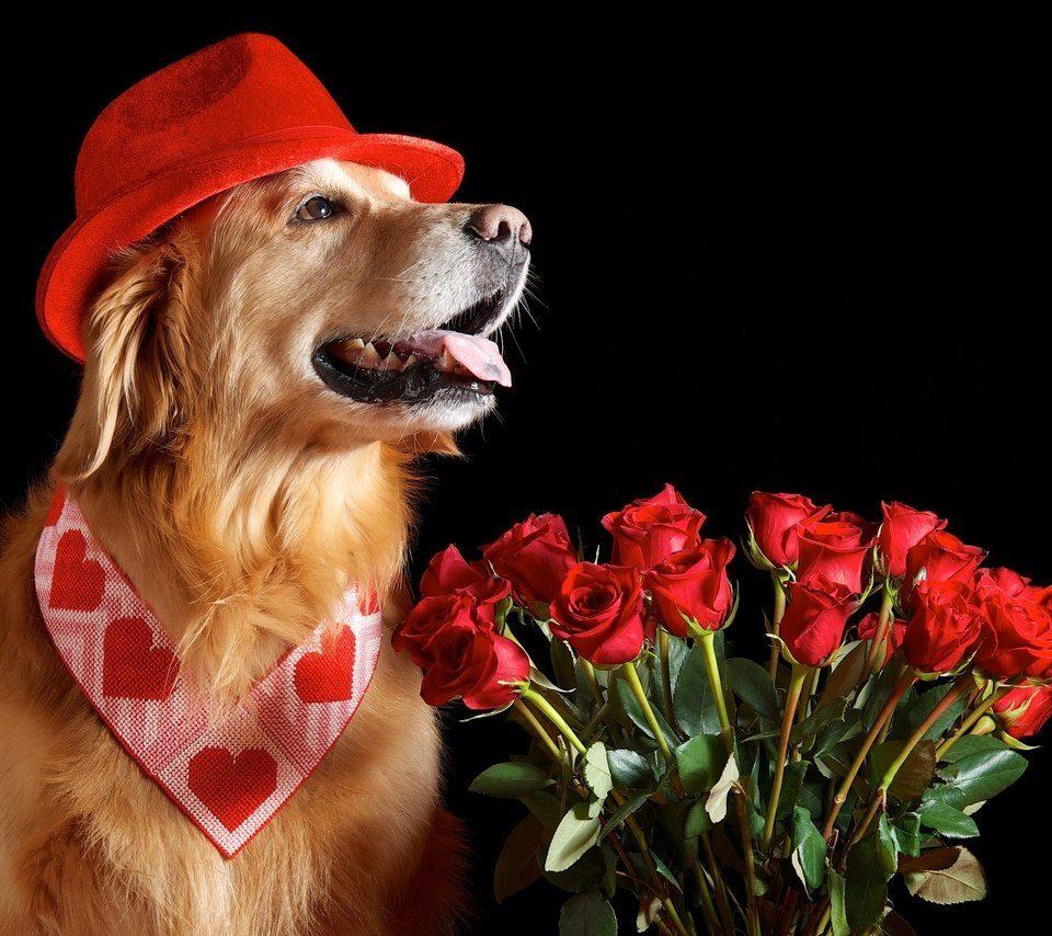 Открытки, открытки с собачками поздравительные