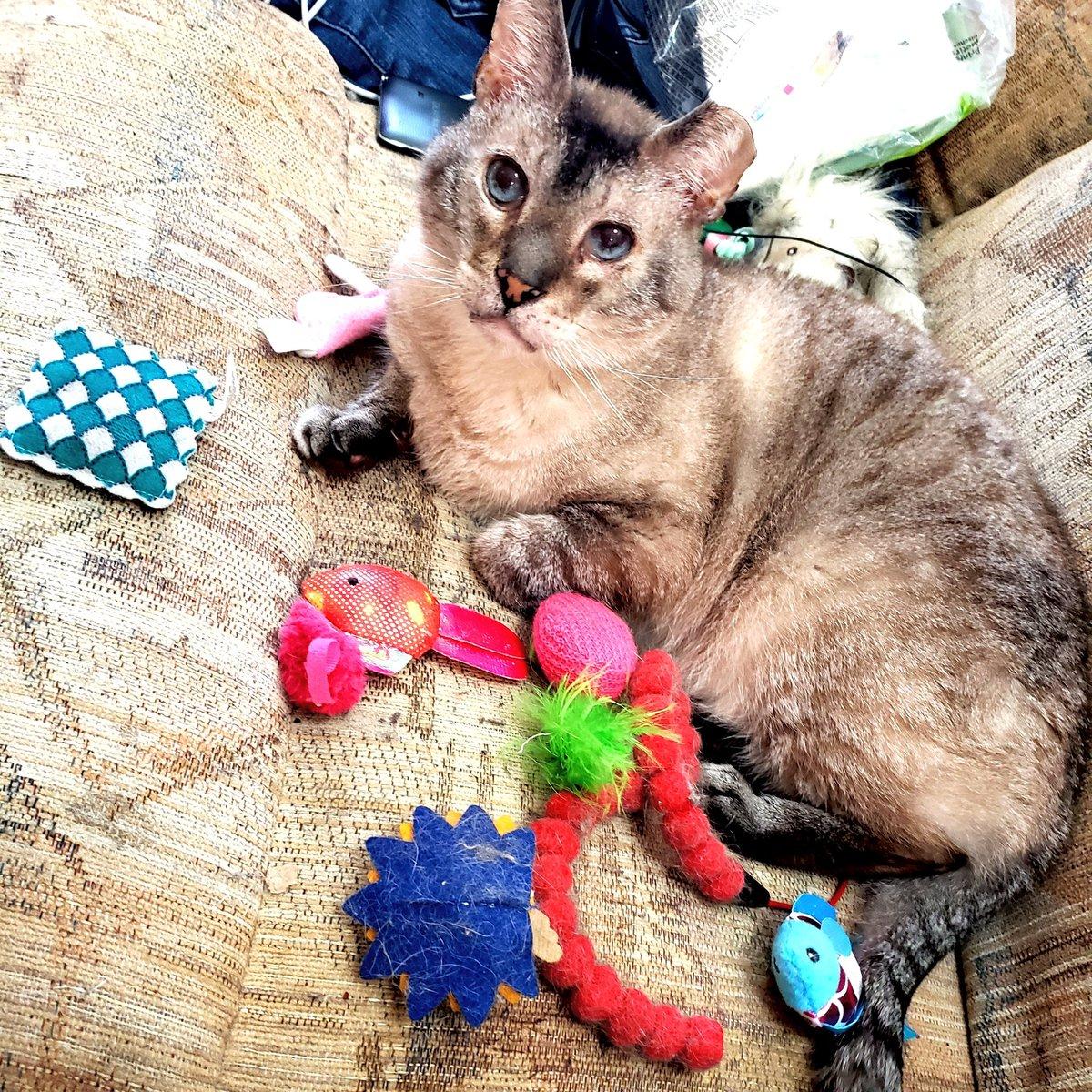 lucy cat por