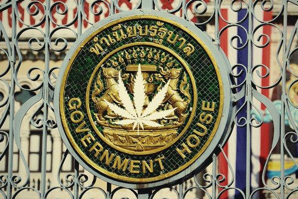 泰国烟草局确认将获取大麻种植牌照