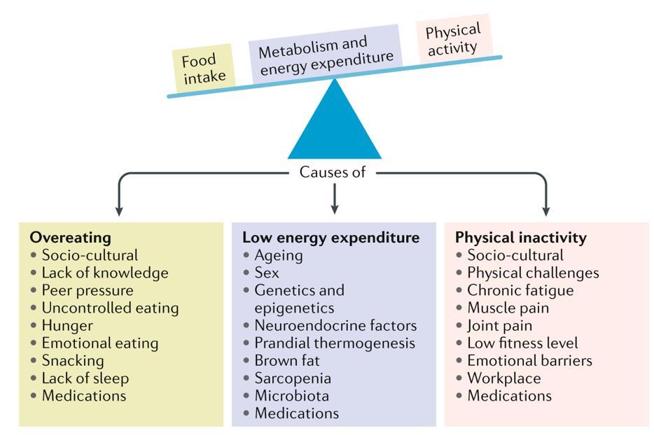 Mechanisms of Inorganic