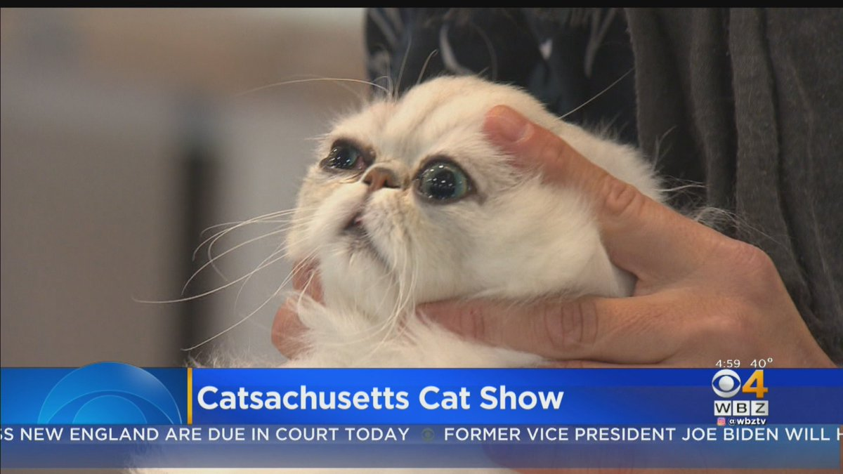 New england cat shows