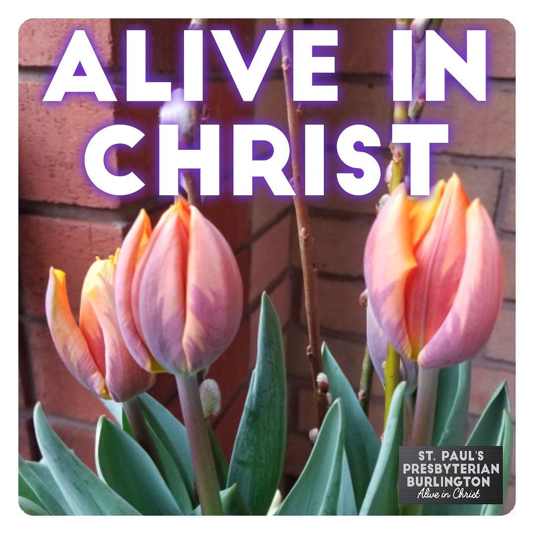 """Image result for SPRING ALIVE IN CHRIST"""""""