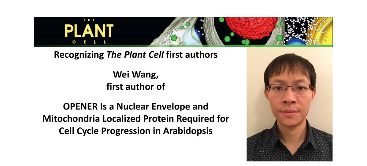 Recognizing The Plant Cell first authors: Wei Wang @WeiWang19539193 https://plantae.org/research/r-the-plant-cell/recognizing-the-plant-cell-first-authors-wei-wang/ …, first author of  OPENER Is a Nuclear Envelope and Mitochondria Localized Protein Required for Cell Cycle Progression in Arabidopsis http://www.plantcell.org/content/early/2019/04/25/tpc.19.00033 …