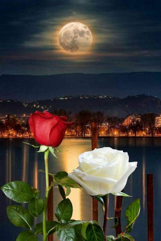 Надписью, розы картинки спокойной ночи