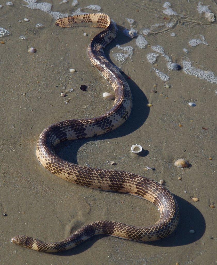 одной какие змеи обитают на мальдивах фото отметить, что дикой
