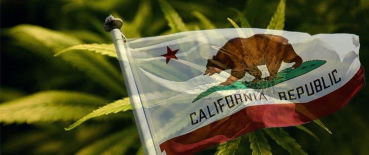 加州大麻合法化一年多 黑市仍旧蓬勃发展