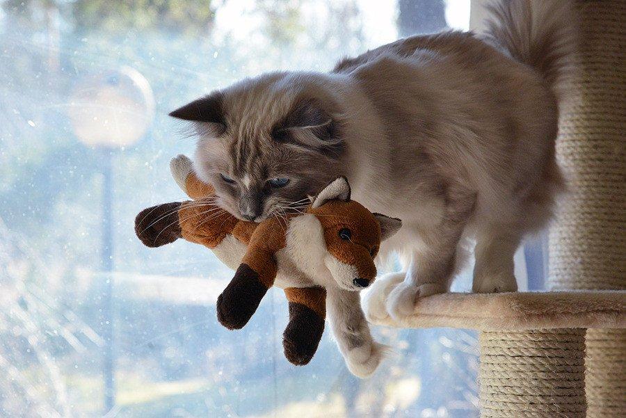 что лисы с котятами картинки мебель