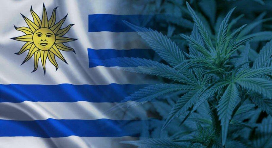 乌拉圭出口首批拉丁美洲医用大麻