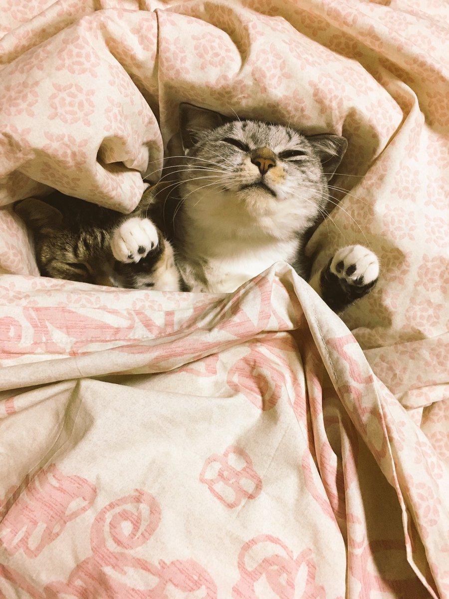 картинки с добрым утром под одеялом вам панталоны разрезом