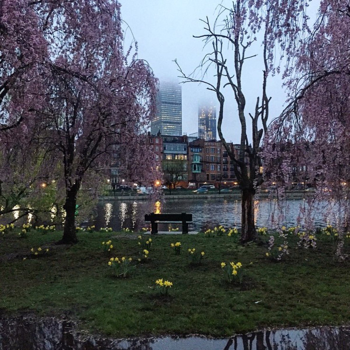 Have you been enjoying the bright daffodils on all these rainy days? Many of the ones you see in the park are the #boston2019 daffodils from Comm Ave, replanted in the park. A huge thank you to our friends at the @GardenClubBBay for making this possible!   : @run_bos_71<br>http://pic.twitter.com/FdhvRi28Wm