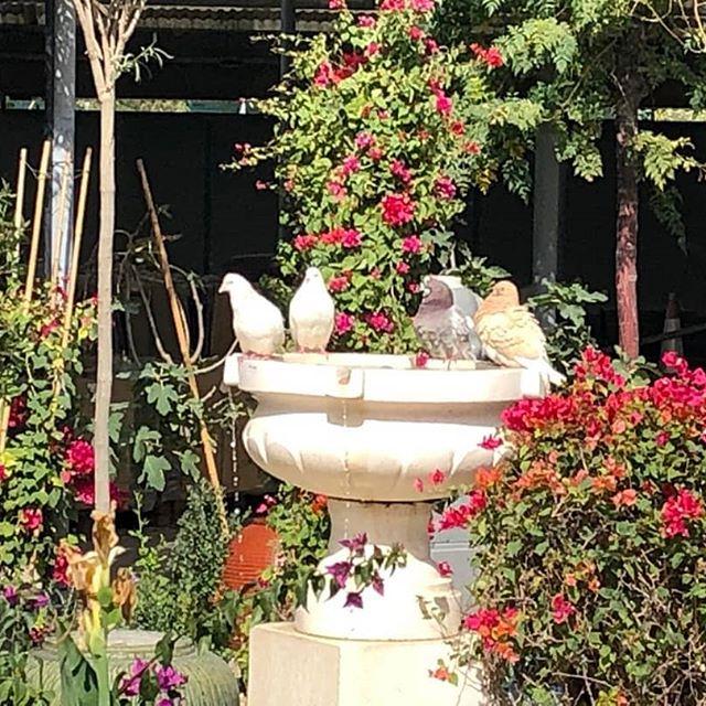 Acacia Garden Center Dubai Acaciagardencen Twitter