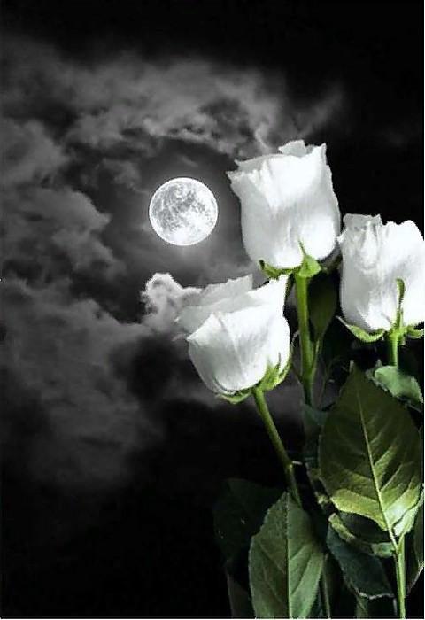 Спокойной ночи картинки красивые для любимой с розами