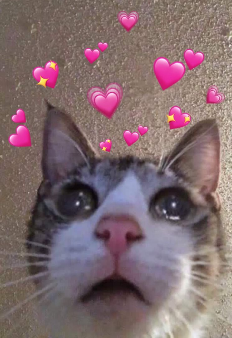 Download Wholesome Cat Meme Hearts | PNG & GIF BASE
