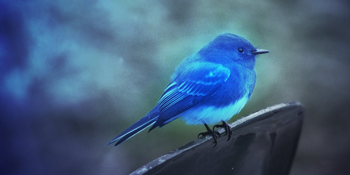 Синяя птица картинки фото птицы