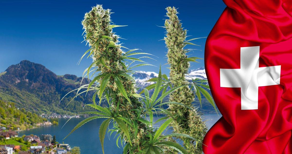 研究表示瑞士三十年后一半人将会嚐过大麻的滋味