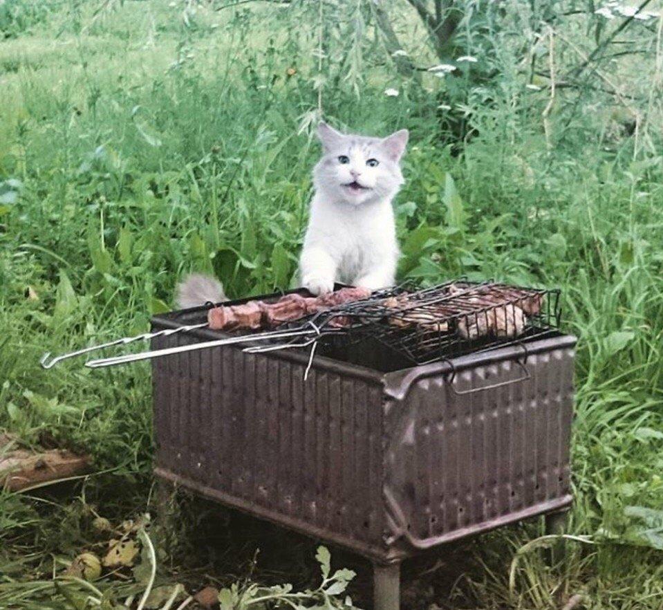 обрадовался картинка кошки на шашлыках природе простоват, по-моему, это