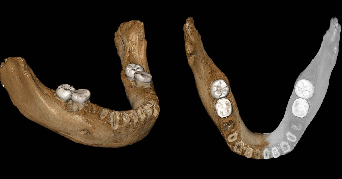 Jawbone fossil from Tibetan plateau sheds light on mysterious Neanderthal kin