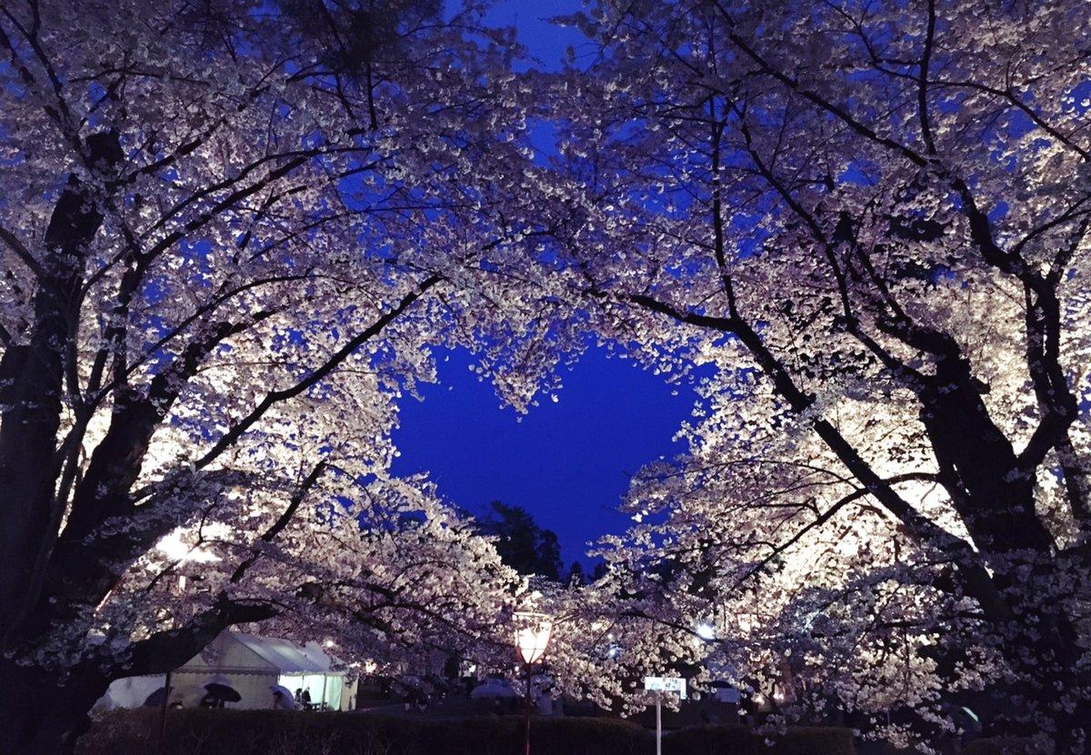 @sanelikechappy さねやすくんお久しぶりです!今年は気温も低く、まだ桜が残ってます?あと、この前旅行でパワースポットを訪れたので、さねやすくんの就職活動が上手くいくよう祈ってきました?♀️そして今日私はひとつ歳をとりました?