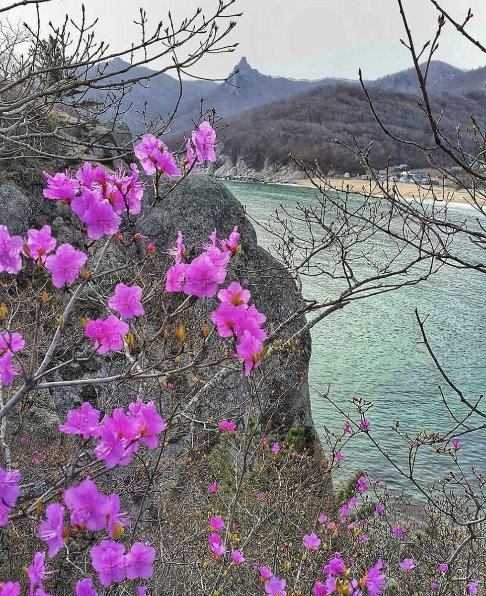 этой фотографии весна в приморье сон залог здоровья