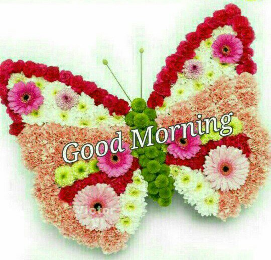 @soniya404 🙏 Good Morning 🙏