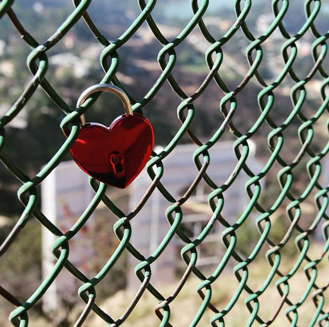 Candados detrás de las letras de Hollywood  Padlocks behind the Hollywood sign #lovelocks #padlocks #hollywooddreams #hollywoodhearts #hollywoodsign #hollywoodstyle #hollywoodcalifornia #flowertravel #lostie #candado #candados #candadocorazon #cal… http://bit.ly/2vAO9i0pic.twitter.com/OkvodB6iNF