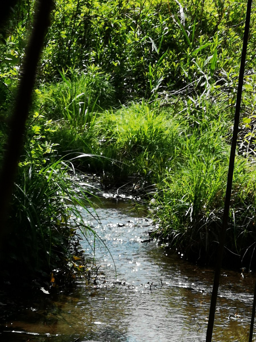 【街歩き:赤羽駅~赤羽自然観察園】 赤羽自然観察公園内。この先に湧水があるようですが、見えません。 #街歩き #凸凹 #スリバチ #湧水