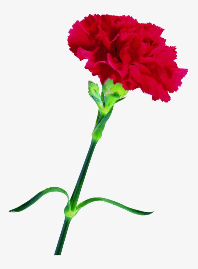 Байрам, картинки цветов гвоздики на 9 мая