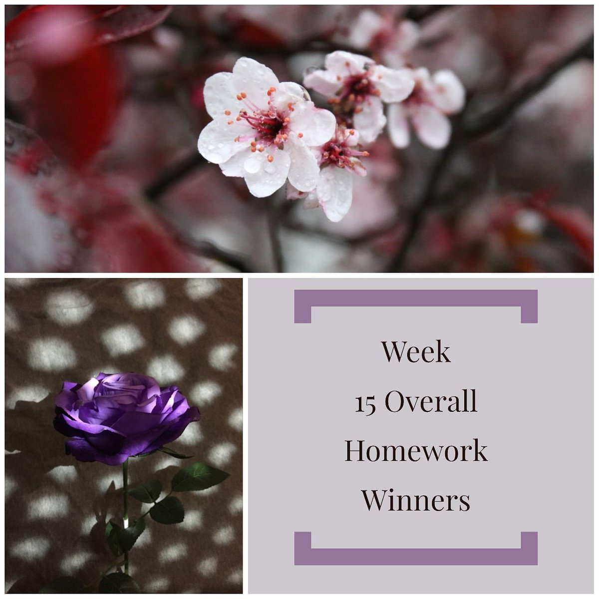 Congratulations Andy & Emilie, the community and your peers voted your photographs at the top this week. Thank you to everyone that voted! #bemoorevisual #beMooreengaging #bemoore #photography #homeworkwinners #highschoolphotographer pic.twitter.com/iWekT8rdHi