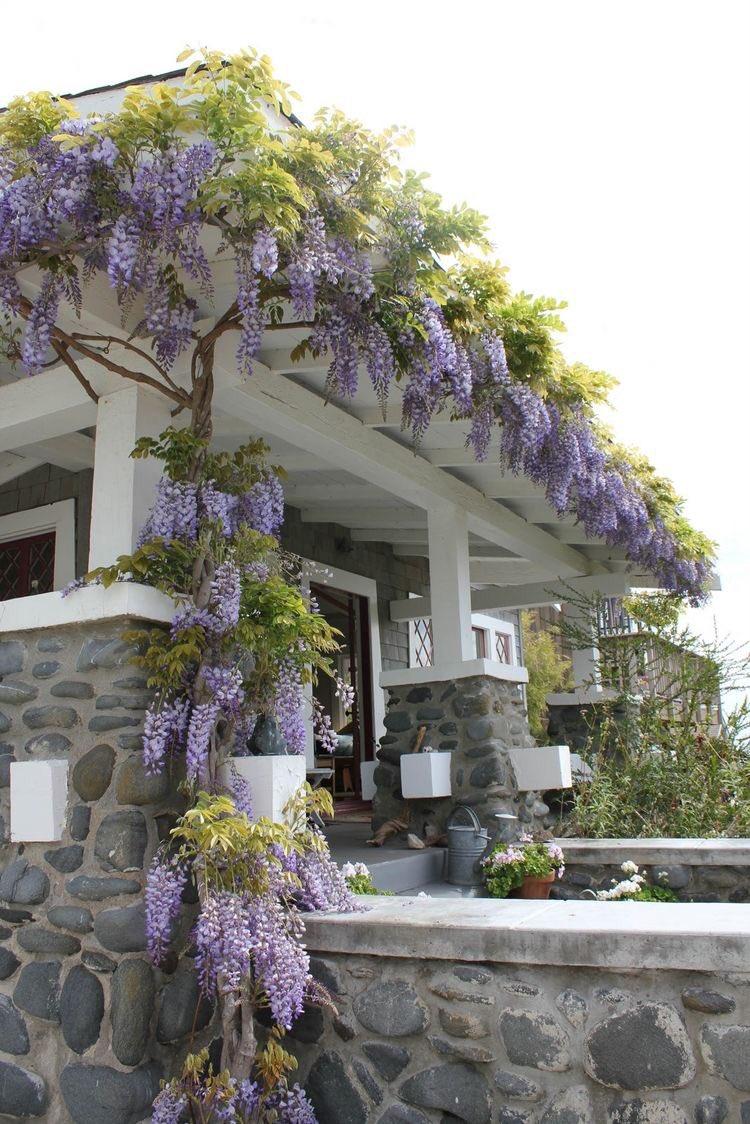 海外にある家の壁面には?藤を上手に這わせている家がある!