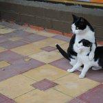 あいつには触らせないにゃ!猫の本音が可愛すぎる件