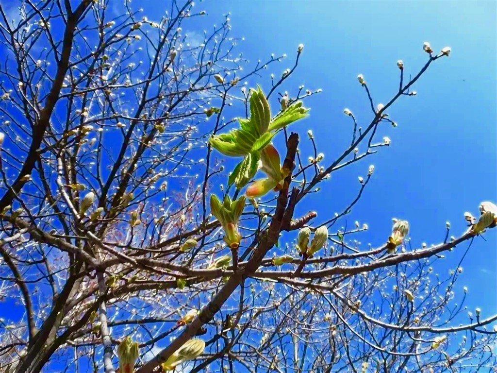 днем фото весна в апреле когда все цветет результате получите