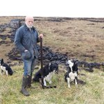 Image for the Tweet beginning: Peat cutting team - quietly