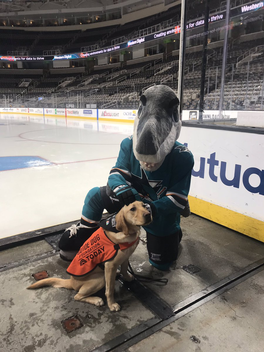 low priced f10d6 6a505 San Jose Sharks on Twitter: