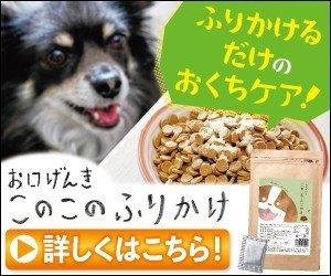 【お口げんきこのこのふりかけ】いつものごはんに混ぜるだけ!人も食べられる品質のペットサプリ #このこのふりかけ #ペットサプリ #犬の歯周病 #犬の歯の健康 #愛犬の歯 #犬歯周病 #犬健康寿命 #犬サプリ https://hikari.click/news/konokonohurikake/…pic.twitter.com/c8d0qY4X9k