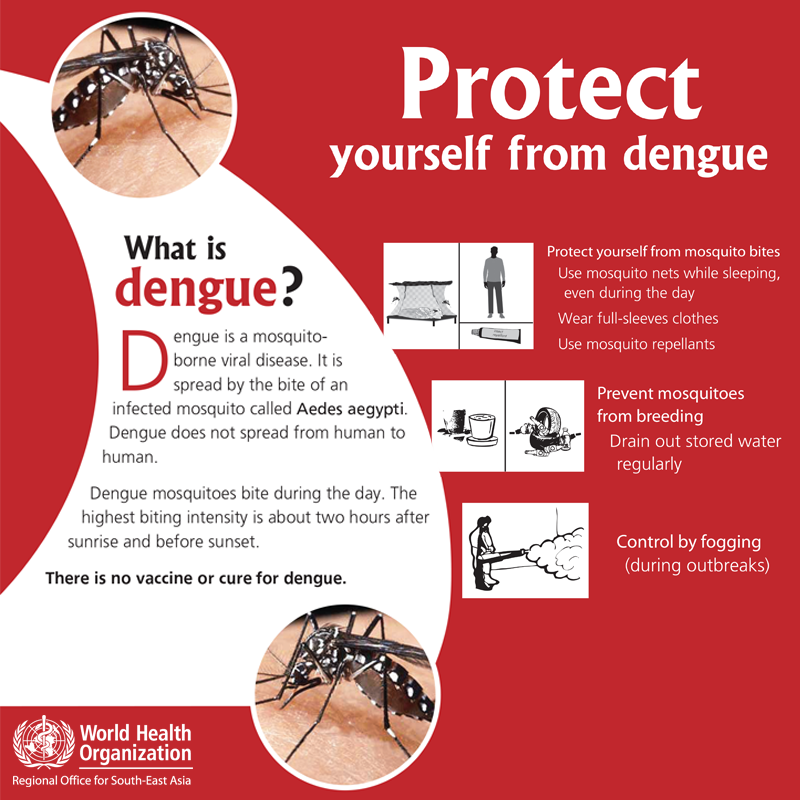 Dengue Fever Infects La Fte De >> Dengue Hashtag On Twitter