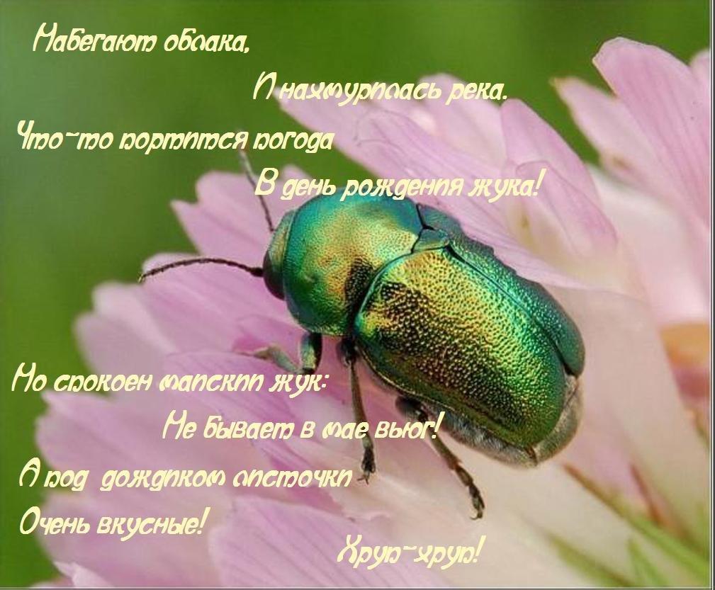 открытка с жуками эффект