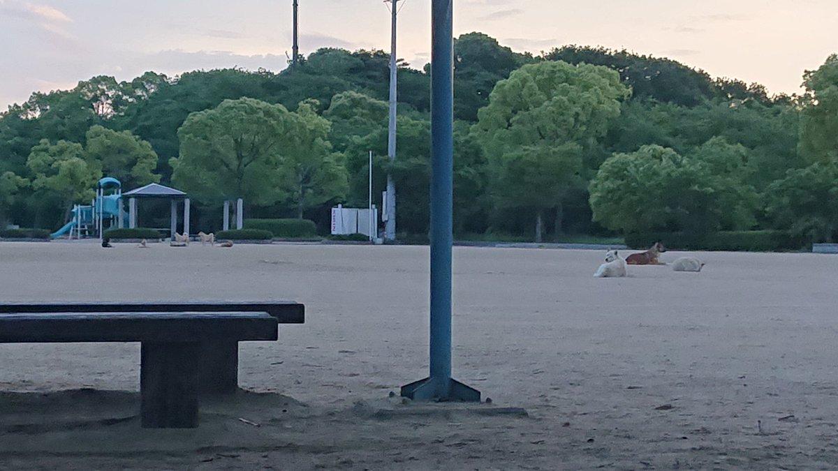 【山口県】野良犬が公園を占拠していて子どもたちが遊べないと問題に 画像あり