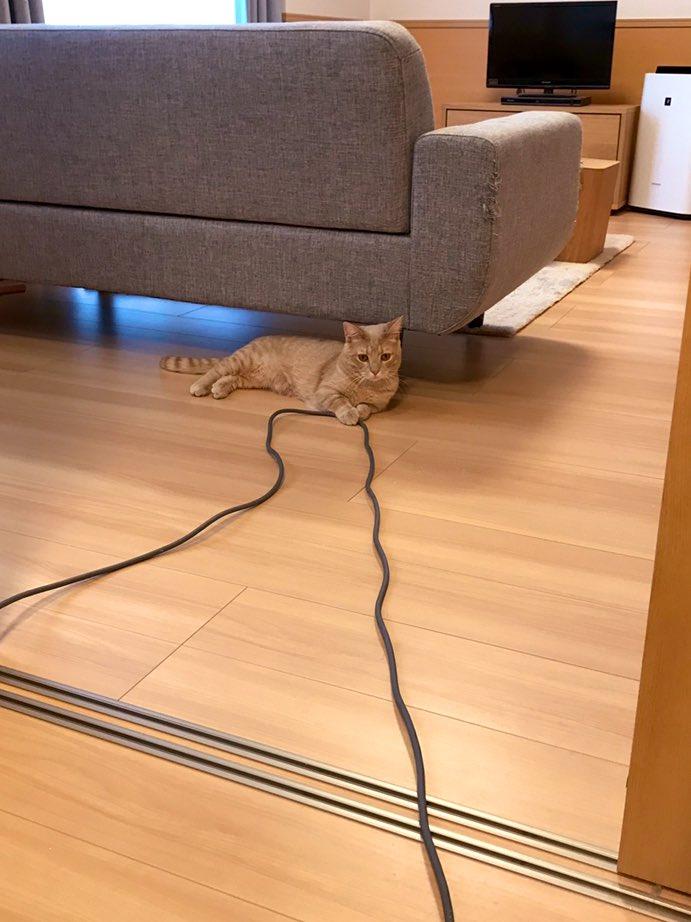 掃除機かけてて「コードこんな短かったっけ?」って思う時大体猫がコード押さえてるんですよね