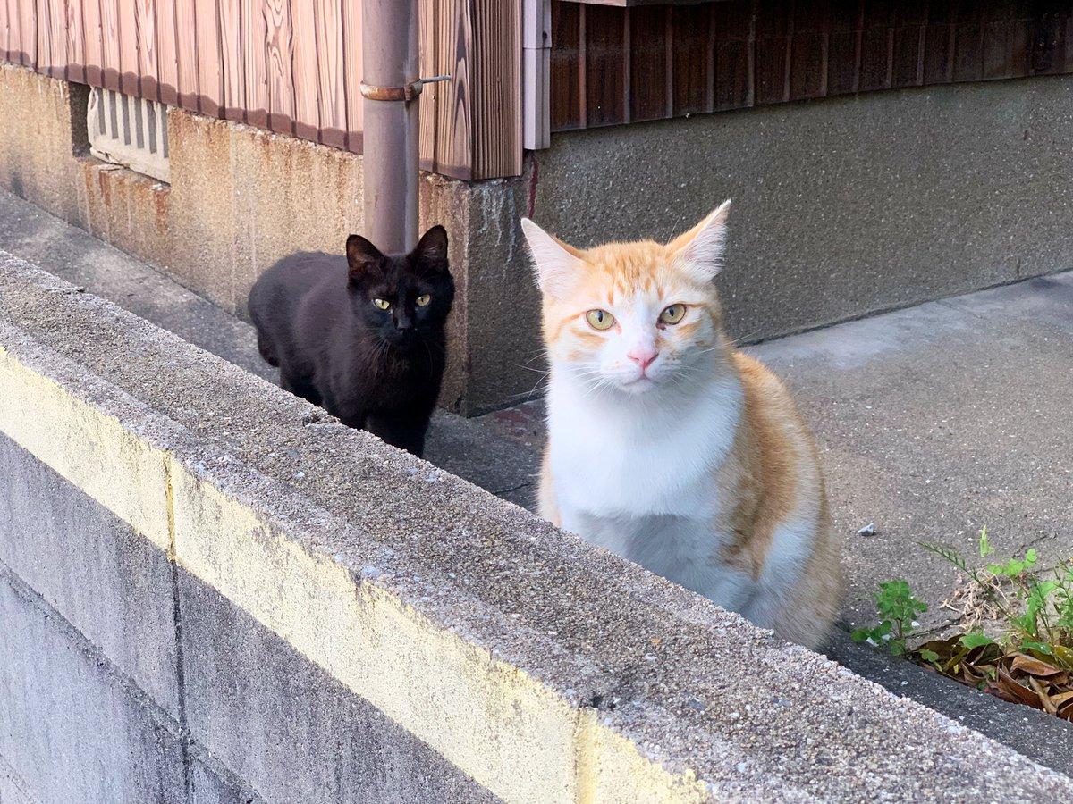 茶色いネコチャンに話しかけてたら黒いネコチャンにガードされてしまった