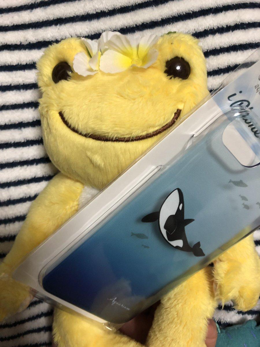 test ツイッターメディア - #キャンドゥ 巡りしてたら発見! 他にチンアナゴも発見(・∀・) ダイバーの皆様、水族館好きな皆様ぜひ✨ #かえるのピクルス #シャチ https://t.co/ftdnaeNwQL