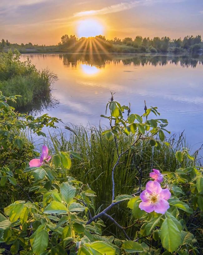 Картинки доброе утро рассвет лето цветы, днем