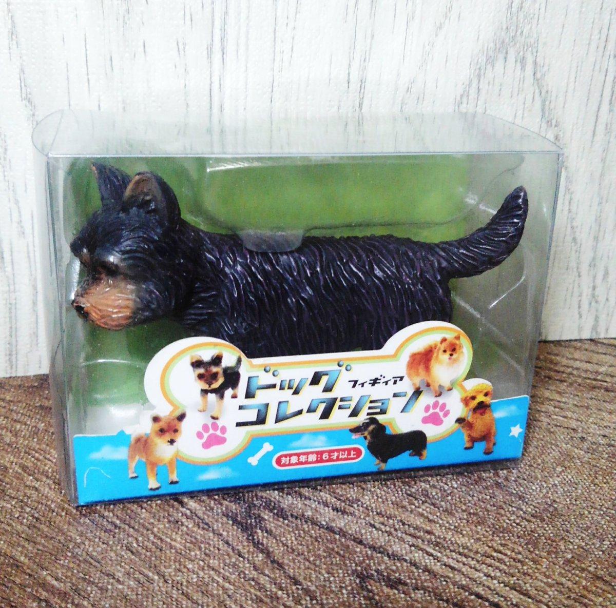 test ツイッターメディア - …という事で今日ご紹介するのは #セリア でGETしたドッグフィギュアコレクション(全6種)のヨークシャーテリア。  置いてない店も多いですが #6分の1 #ドールに使える サイズの犬は貴重ですね!  #ドール小物 #100均大好き https://t.co/zgZfT7HWAy