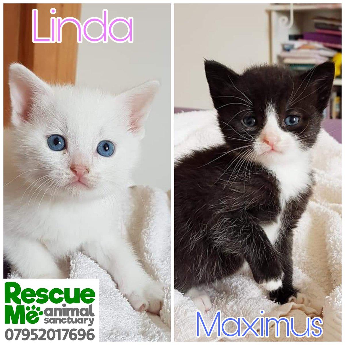 Rescue Me's photo on #Caturday